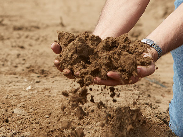 There's a Secret in this Soil- it's exactly like the soil- that Benno learned to grow in the Netherlands...