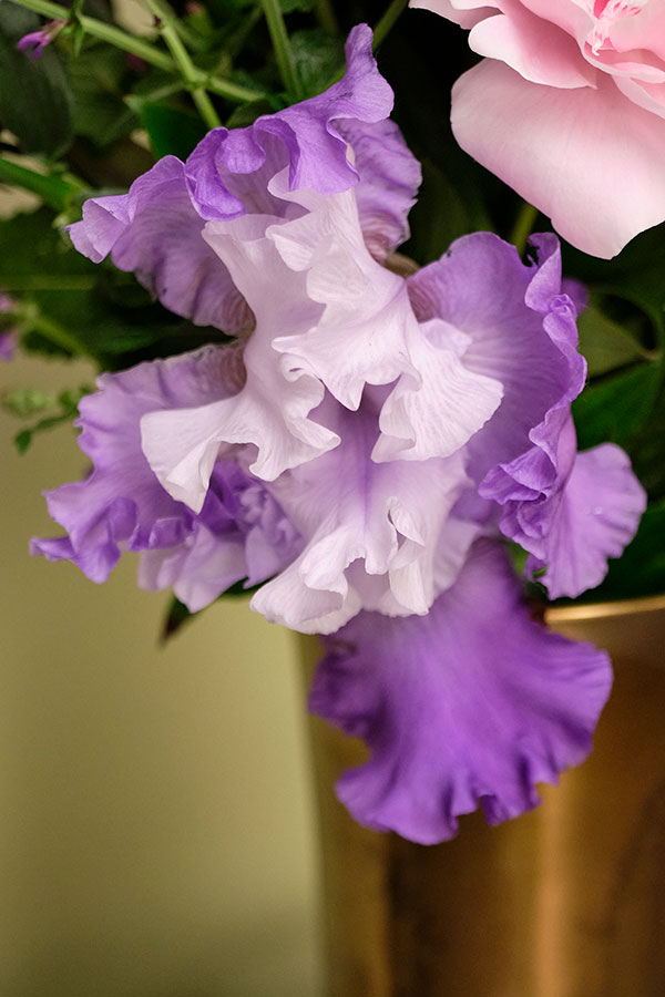 I have several colors of Bearded Iris in the Garden- and I love including them in my arrangements!