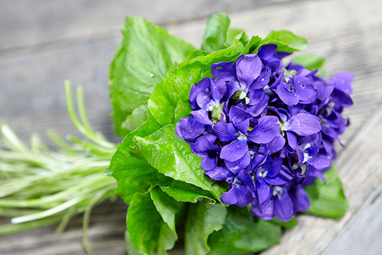 On this episode of Life In Bloom we're cultivating a passion for purple. I'll show you precious violets, easy centerpieces, and a regal showstopper with Lilacs. We'll also visit a Clematis farm in Florida and create a Lavender Martini.