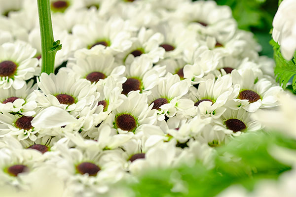 """The """"floor"""" inside the cloché is covered in flowers- thanks to the YinYang Spray Chrysanthemums- it's a FLOWER WORD!"""