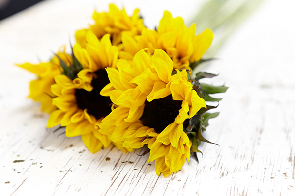 Using flower food- and cold water will help you extend the life of your beautiful flowers!