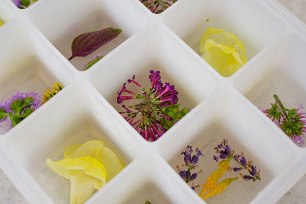 Starting the process with only a layer of water to freeze the flowers in place is key to success!