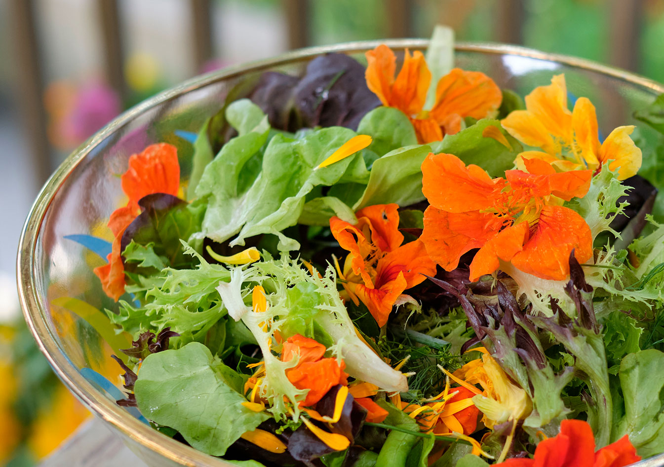 The Fairy Mix Salad mix from the Blandford Nature Center- with fresh Nasturtium