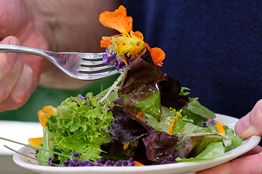 J shares this lemon- chamomille dressing for salad- as the Recipe in Bloom!